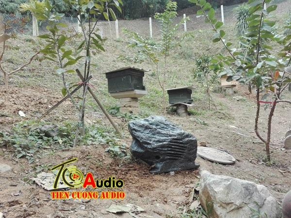 hình ảnh loa đá DSP 644